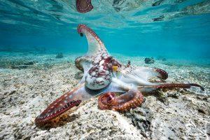 Randonnée sur la barrière de corail à Mayotte
