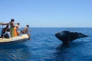 Sortie bateau excursion baleine à Mayotte (Photo Mayotte Découverte)