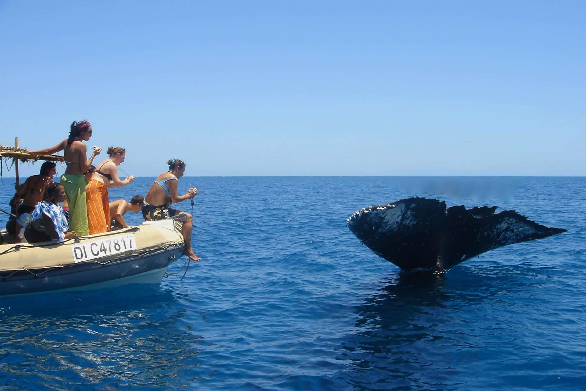 Photo sortie en mer Mayotte