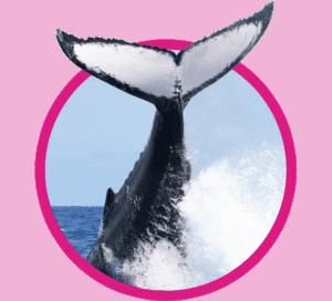 vignette baleine