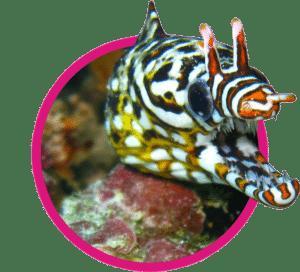 vignette randonnée barrière de corail