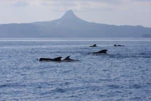 Mont Choungui et dauphins à Mayotte