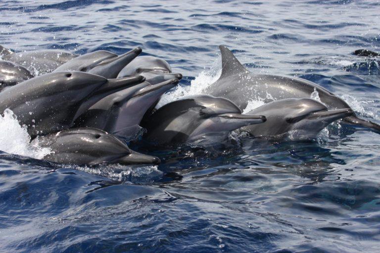 Dauphins avec Mayotte Découverte