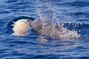 Nager avec les dauphins avec Mayotte Découverte