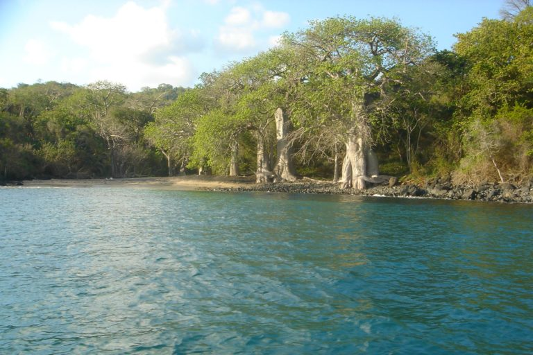 plage baobab à Mayotte