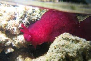 Randonnée sur la barrière de corail avec Mayotte Découverte
