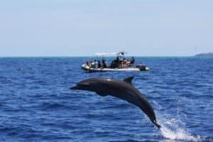 saut de dauphins avec Mayotte Découverte