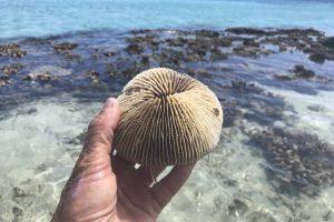 Corail lors d'une randonnée de jour sur la barrière de corail avec Mayotte Découverte