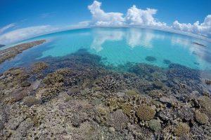 Randonnée de jour sur la barrière de corail avec Mayotte Découverte